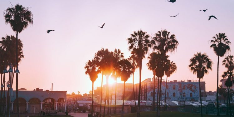 Great Things To Do Near Venice Beach