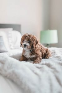 Puppy Proofing Your House or Apartment | The Ultimate Guide & Checklist